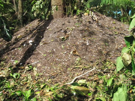 A Palau Megapode mound