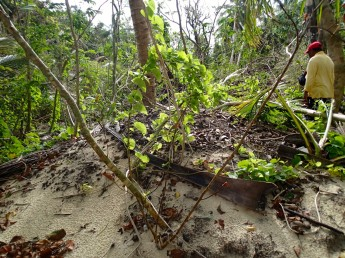 cropped-typhoon-damaged-mound1.jpg